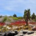 04-Bohnaus-ECU-Galapagos