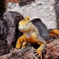 06-Bohnaus-ECU-Galapagos