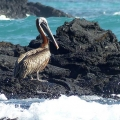 07-Bohnaus-ECU-Galapagos