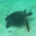 08-Bohnaus-ECU-Galapagos