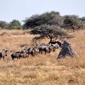 Bohnaus-Namibia-02