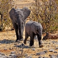 Bohnaus-Namibia-06