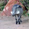 Bohnaus-Namibia-07