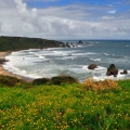 06_NZ_Bohnaus_Cape-Foulwind