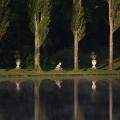 Wörlitzer See - früher Morgen