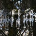 Eisgirlanden-08-Schmid-Pfaehler