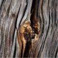 Pl.1-Holzstruktur-Schreiber