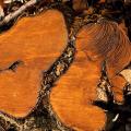 Pl.7-Holzstruktur-Fuchslocher