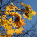 Schmid-Pfaehler-Herbst-01