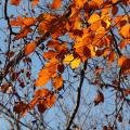 Schmid-Pfaehler-Herbst-02