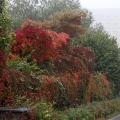 Schmid-Pfaehler-Herbst-04