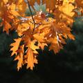 Schmid-Pfaehler-Herbst-08