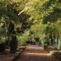 Schmid-Pfaehler-Herbst-09