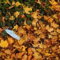 Schmid-Pfaehler-Herbst-10