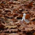Schmid-Pfaehler-Herbst-11