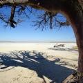 Baines Baobabs, Nxai-Nationalpark