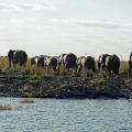 Chobe-Fluss