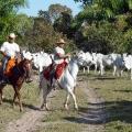 Gauchos, Pantanal