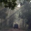 Auf Morgenpirsch - Bandhavgarh Nationalpark