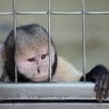 Tiere im Zoo, 1. Platz
