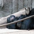Tiere im Zoo, 3. Platz