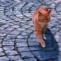 Katze in Lich