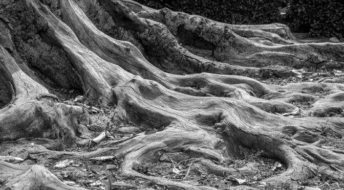 """Fotowettbewerb """"Holzstrukturen"""" – Siegerfotos"""