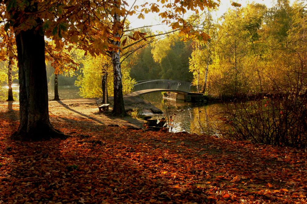 Herbst am Schwanenteich (c) Renate Klinkel