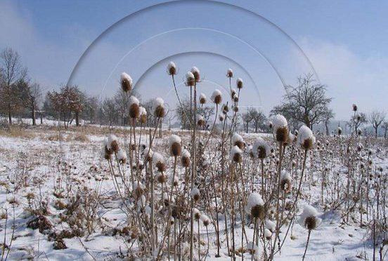 Karlheinz Engel: Winterbilder