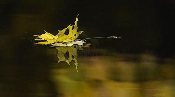 """Fotowettbewerb """"Herbst"""" – Siegerfotos"""