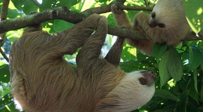 Jürgen Soose: Costa Rica – Garten Mittelamerikas