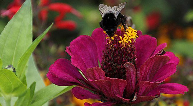 Renate Klinkel: Landesgartenschau 2014 – Blütenpracht im Sonnenlicht